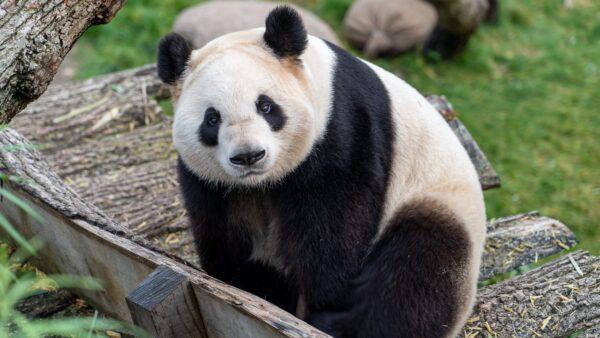 こんにちは!パンダです。